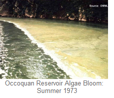 Algae Bloom